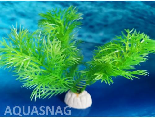 Фото Растение серии Sunny AP- 083G, 10см Смотреть