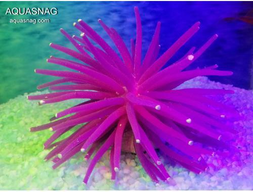 Фото Актиния силиконовая Ёжик RT-172L, фиолетовая aquasnag.com