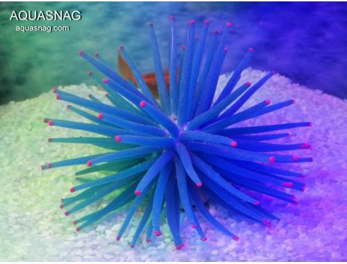 Фото Актиния силиконовая  Ёжик RT-172L, синяя Смотреть