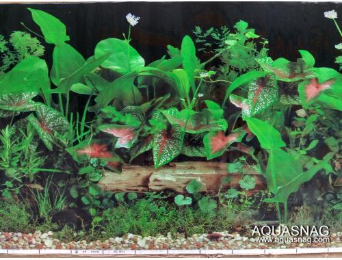 Фото Фон для аквариума односторонний высотой 30см, цена за 25м (9012черн) aquasnag.com