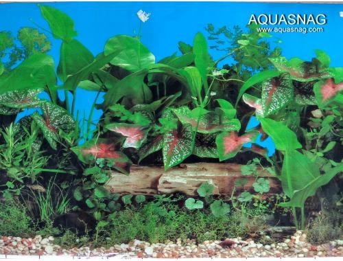 Фото Фон для аквариума односторонний высотой 40см(9013син), цена 10см Смотреть
