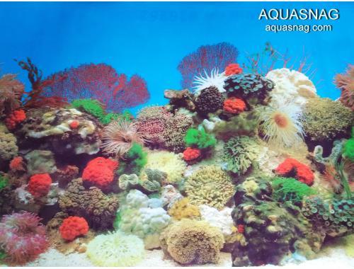 Фото Фон для аквариума  односторонний высотой 60см(9001), цена за 10см Смотреть