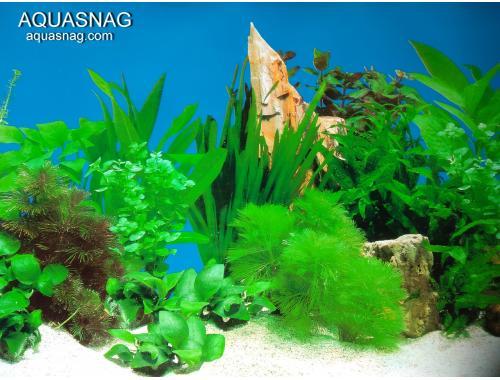 Фото Фон односторонний высотой 50см, LONG 5, цена за 10см aquasnag.com