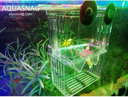 Фото Отсадник малый вертикальный с крышечкой  (8х7х11 )см,  пластик aquasnag.com