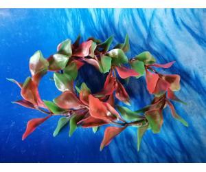 Плавающие растение,  (13*8*2)см людвигия