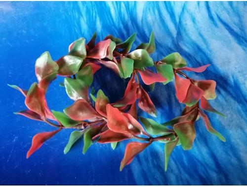 Фото Плавающие растение,  (13*8*2)см людвигия Смотреть