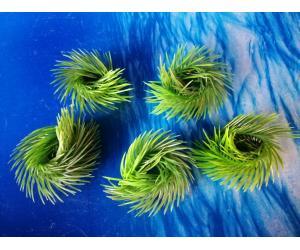 Плавающие растение,   AP 027C