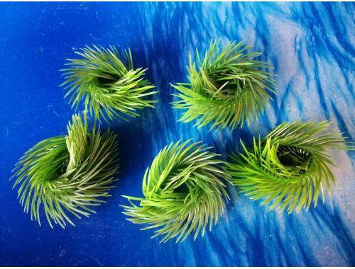 Фото Плавающие растение,   AP 027C aquasnag.com