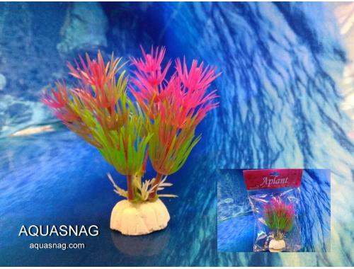 Фото Растение Aplant - 10см, Е 1 aquasnag.com