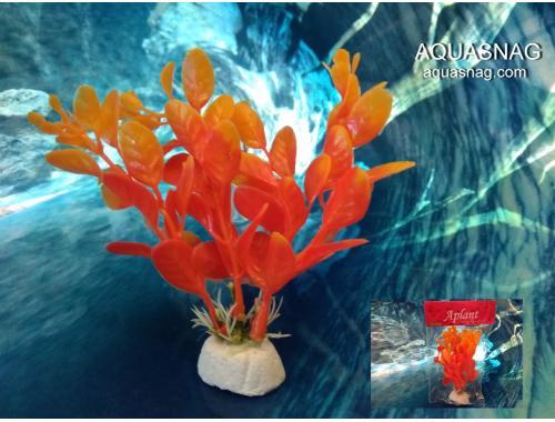 Фото Растение Aplant - 10см, Е 20 Смотреть