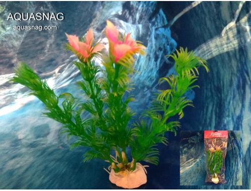 Фото Растение Aplant - 10см, Е 8 Смотреть