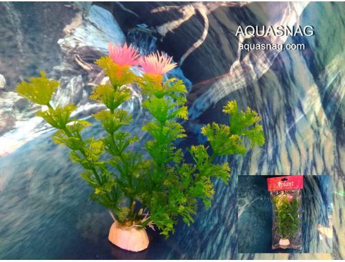 Фото Растение Aplant - 10см, Е 9 Смотреть