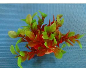 Растение N- 039А,  10см