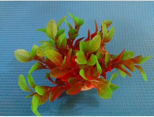 Фото Растение N- 039А,  10см aquasnag.com