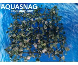 Растение коврик (18*18*2.5)см, лист зеленый