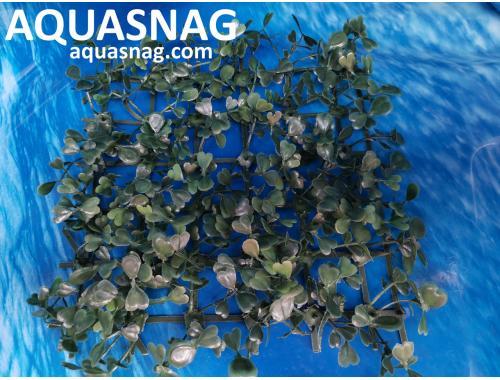 Фото Растение коврик (18*18*2.5)см, лист зеленый Смотреть