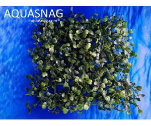 Растение коврик (18*18*3)см, темно зелёный лист