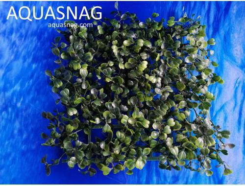 Фото Растение коврик (18*18*3)см, темно зелёный лист aquasnag.com