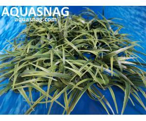 """Растение коврик (18*18*4)см,  """"трава длинная"""""""