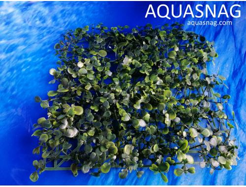 Фото Растение коврик (25*25*3)см, лист темно зелёный Смотреть