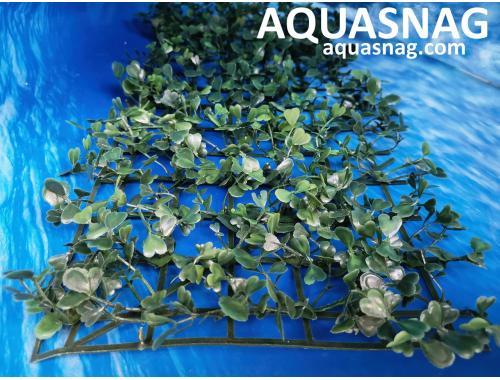 Фото Растение коврик (40*18*2)см, трава Купить