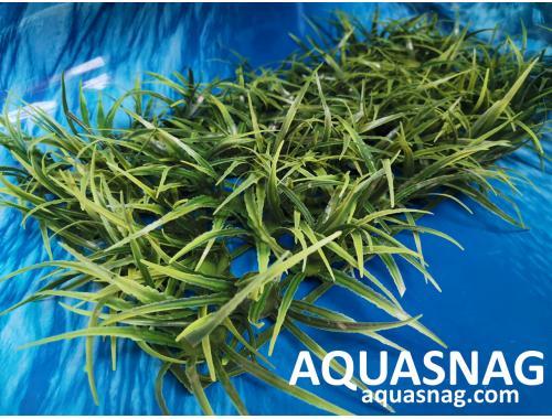 Фото Растение коврик (40*18*4)см,  трава длинная aquasnag.com