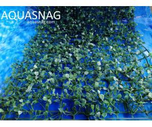 Растение коврик (40*59*2.5)см, лист зеленый