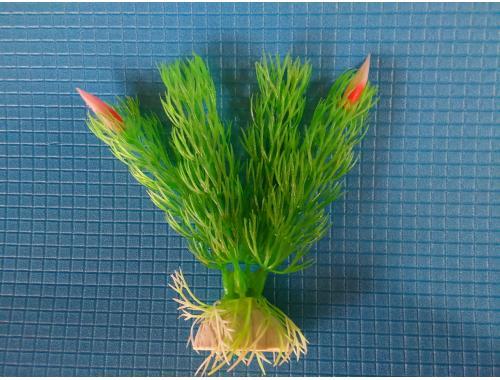 Фото Растение серии Е 8 - 10см Купить