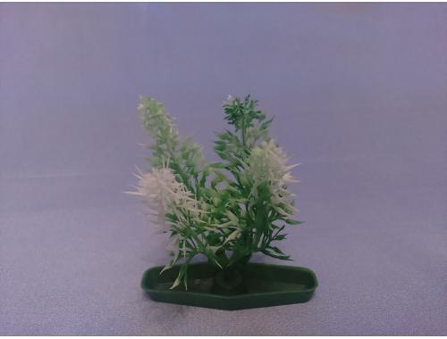 Фото Растение серии К № 7 - 10см aquasnag.com