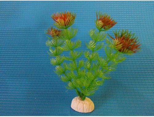 Фото Растение серии Sunny AP-013С, 10см Смотреть