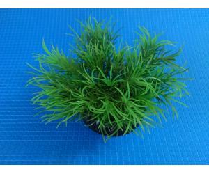 """Растение серии """"Sunny""""  Q- 158C, 10см"""