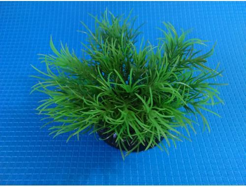 Фото Растение серии Sunny  Q- 158C, 10см Купить